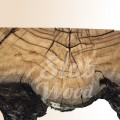 Консоль из пня мореного дуба в стиле ЭКО №68